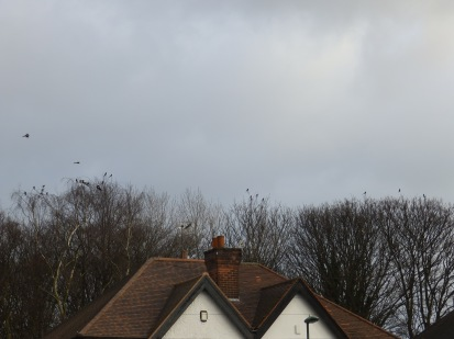 I think there are 28 Magpies in this photo