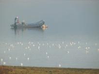 Gulls at Carsington Water