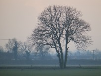 Tree on the FEns