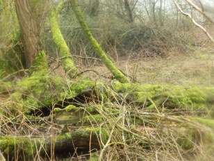 Moss at Rufford - Landscape setting