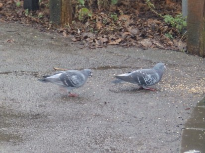 Don't feed the Pigeons!