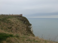 Viewpoint at Bempton Cliffs