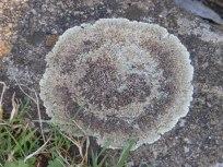 Circular lichen on a kerbstone