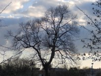 Arnot Hill Park, Arnold