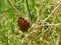 Comma at East Leake