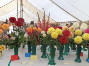 Flower competition - Flintham Show