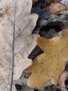 Autumn leaves - Rufford Abbey