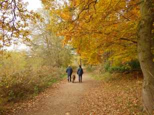 Walkers at Clumber