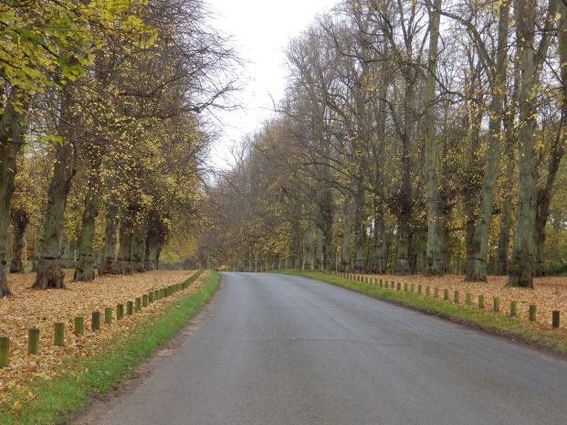 The Lime Avenue - Clumber