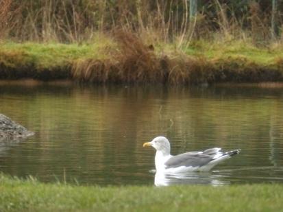 Duck pond - Tebay