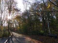 Rufford Abbey - footpath by the Lake