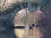 Greylag geese under archway at Rufford