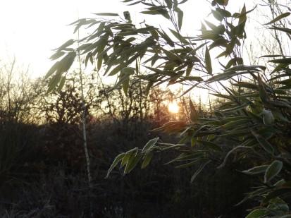 More bamboo