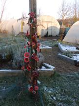 Poppies at Mencap gardens