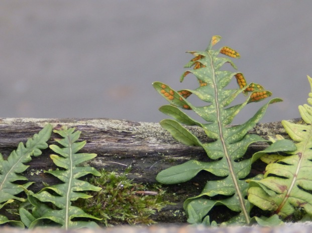 Ferns on the Wharf at Snape Maltings