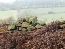 Wall and bracken, near Matlock