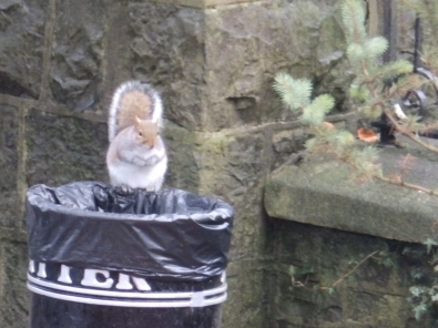 The squirrel in the bin - Clitheroe
