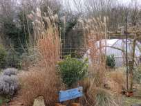 Grasses at Wilford, Notts