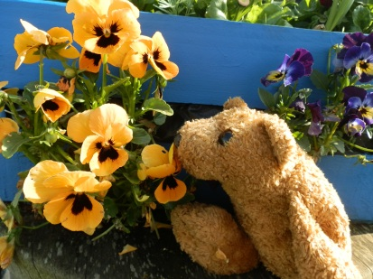 Bear with pansies
