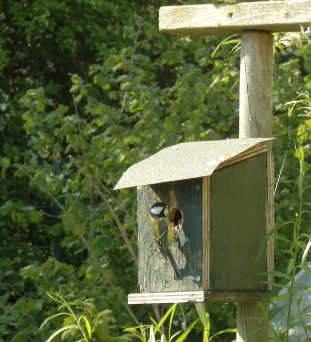 The other Great Tit nest