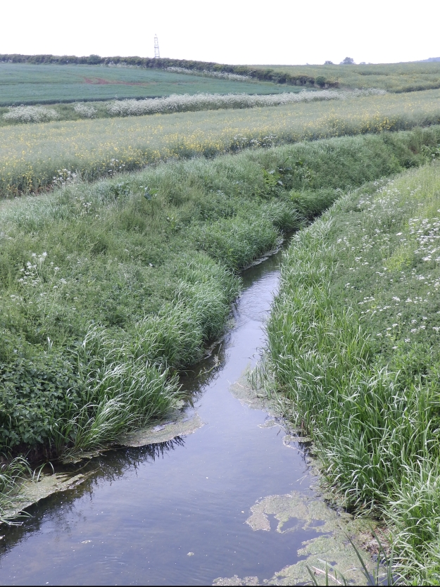 A stream near Lound in Lincolnshire