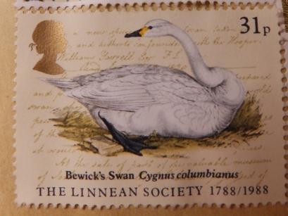 Bewick's Swan stamp