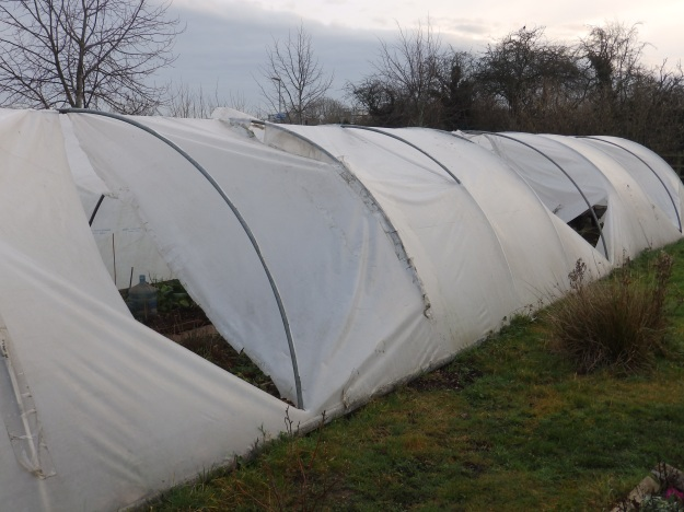 Polytunnel in distress