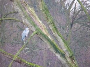 Heron at Clumber - enhanced colour
