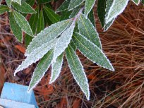 Leaves and frost - Wilford, Nottingham