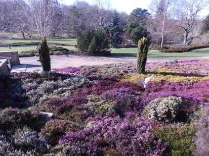 Harlow Carr Heather bed