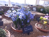 Harlow Carr Alpine House