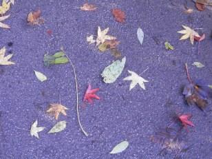 Autumn - Arnot Hill Park