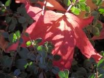 Autumn _ Arnot Hill Park