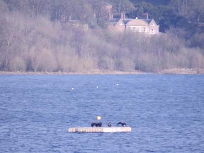 Nice view - Carsington Water