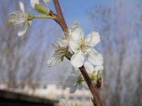 Mencap Garden April 2019ERA