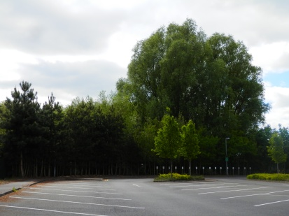 More trees in a car park
