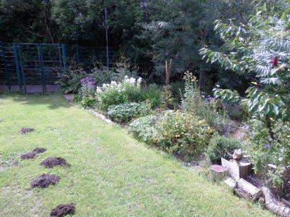 Moles like the garden too
